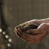Assessing the soil health