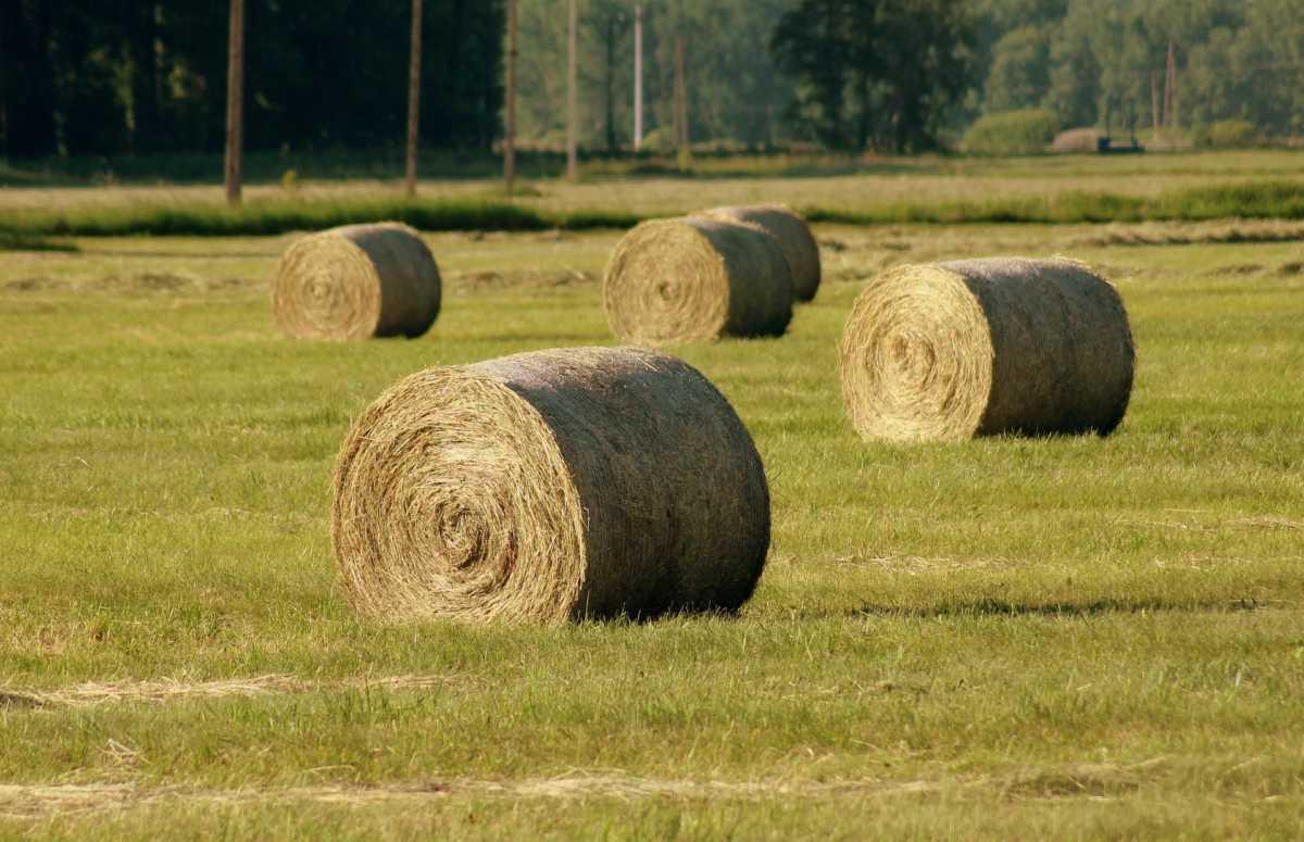 New for 2018: DAIRY DOO's Hay Program