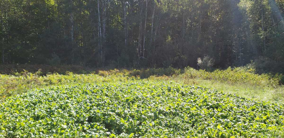 What's Growing With Tom Week 17: How to Plant a Food Plot