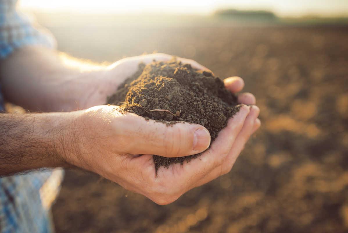 Has Your Soil Foiled Your Garden Dreams?